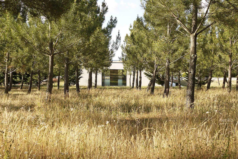cubierta vegetal mimetismo verano casa campo pinar libreros Bamba Zamora Henka Arquitectos