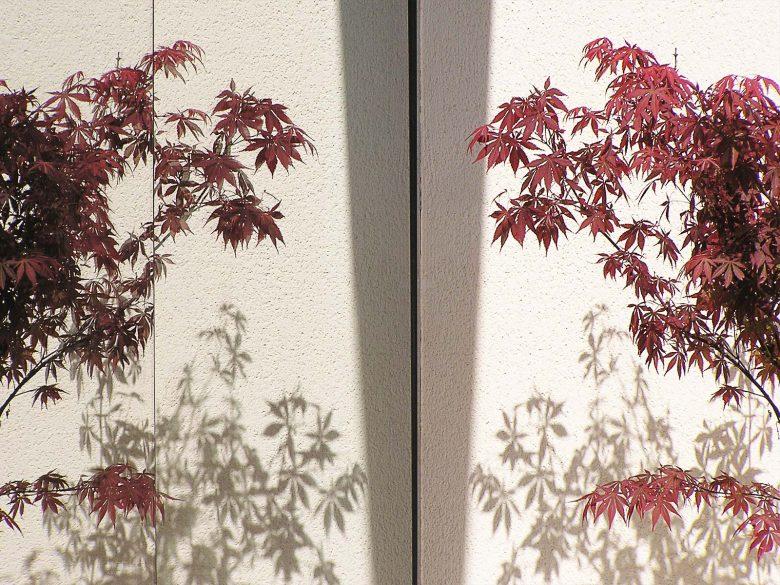 reflejos Acer palmatum Bambouseraie Prafrance Casa Tierra Vino Morales Zamora Henka Arquitectos