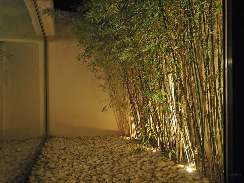 Bambú Phyllostachys Bambouseraie Prafrance Casa Tierra Vino Morales Zamora Henka Arquitectos