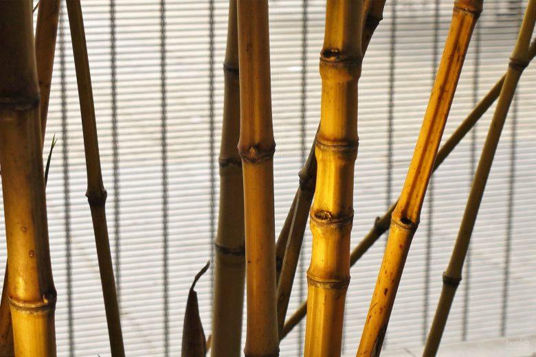 Ecoterraza detalle texturas bambúes HenkaArquitectos