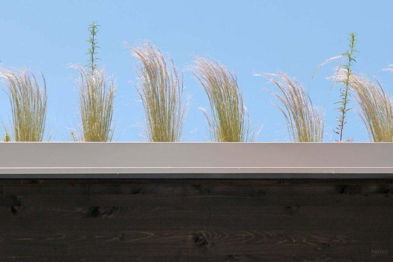 Ecoterraza pabellón prefabricado modular Detalle remate cubierta vegetal gramineas HenkaArquitectos