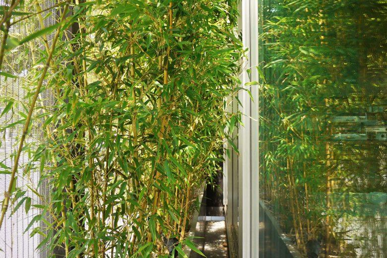 Ecoterraza sombreamiento natural follaje bambúes HenkaArquitectos